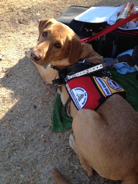 Encanto Park Dog Training
